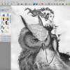 Video timelapse: Owl Princess